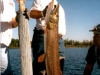 Northern Pike Fishing at Lawrence Bay Lodge