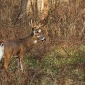 Common Hunting Mistakes to Avoid