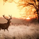 Tips for Opening Day of Deer Season