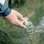 Guided Fishing Trips in Northern Saskatchewan