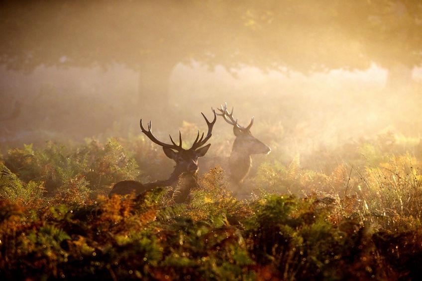 Moose Hunting in Saskatchewan