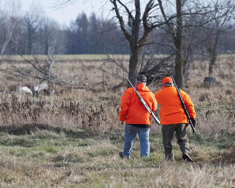 Two Hunters in Orange with Rifles on Field